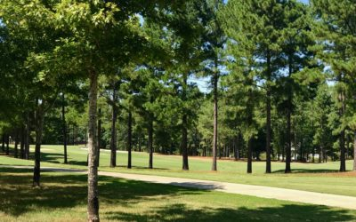 Double Fairway Views For Under $30,000