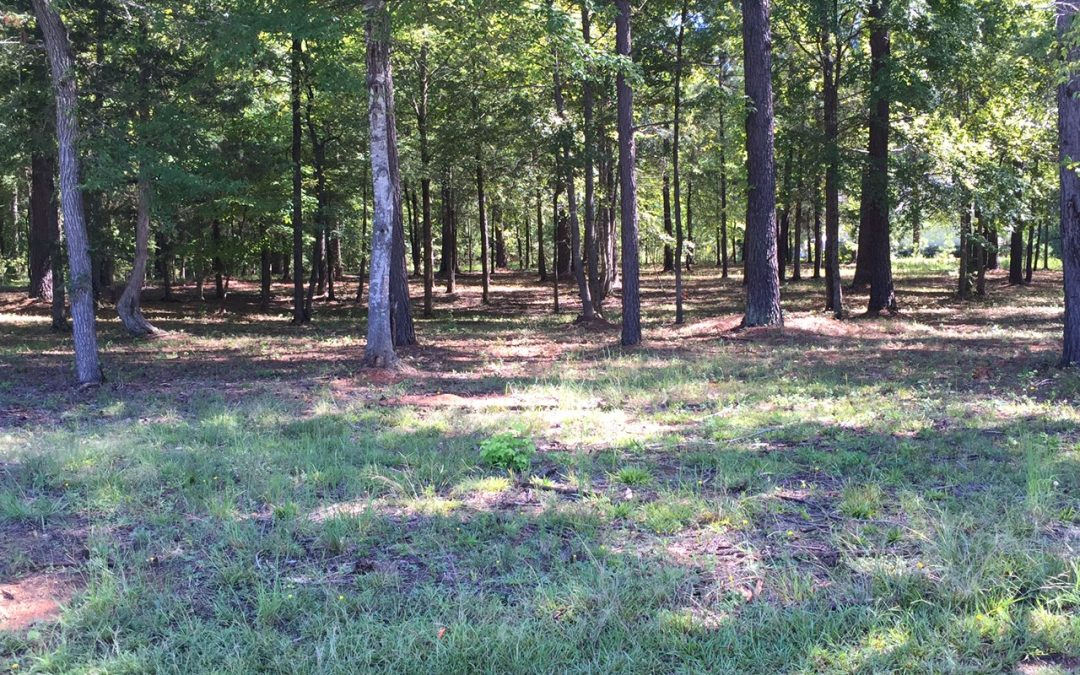 201 Compass Point   Homesite 53