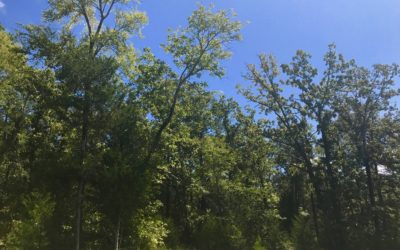 Nearly 2 Acres Of Heavily Wooded Property